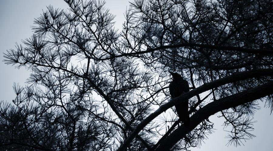 Silhouet af et træ med en ravn
